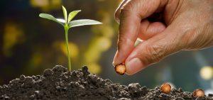 Empresa de tecnologia que licencia uso de semente melhorada não recolhe ISS
