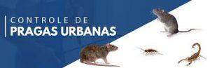 Associação alerta para aumento de pragas urbanas durante isolamento